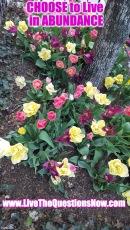 Abundant Tulips