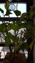 A Healthier Plant